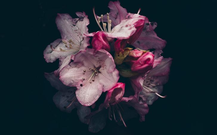 雨に濡れる萬葉草花苑の石楠花(シャクナゲ)
