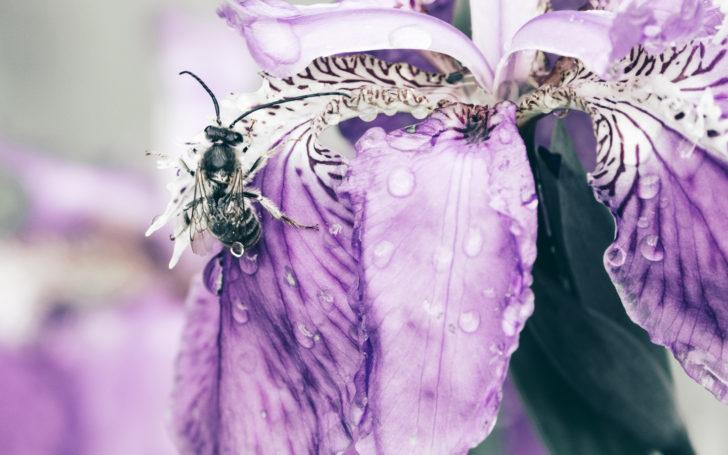 一初と雫とクロスズメバチ