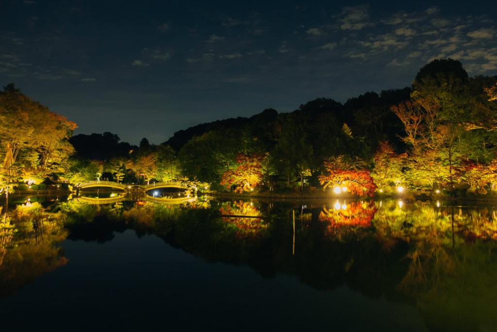 ライトアップされた薬師池